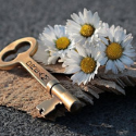 Daisies and key