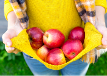 woman holding apples in her shirt